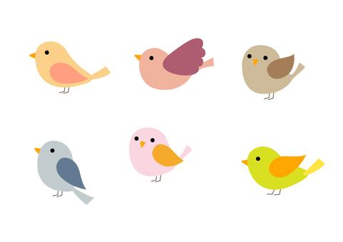 Mr. 小鳥 20