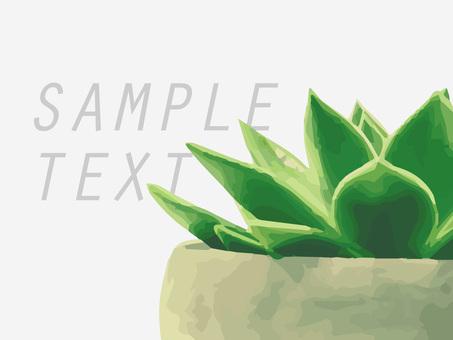Real cactus illustration