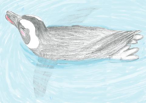 Penguin swim