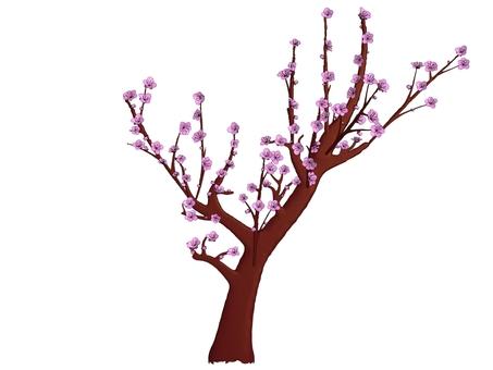 Plum tree red