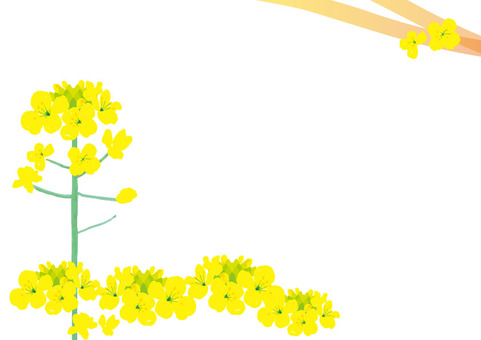 Ripe hand-drawn rape flower