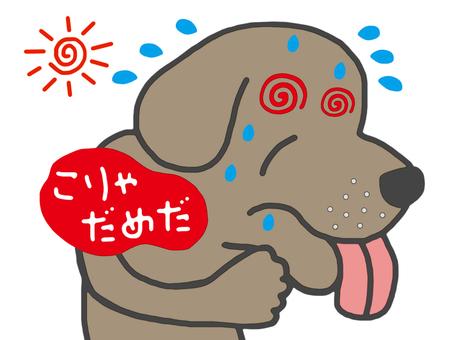 Summer beating dog
