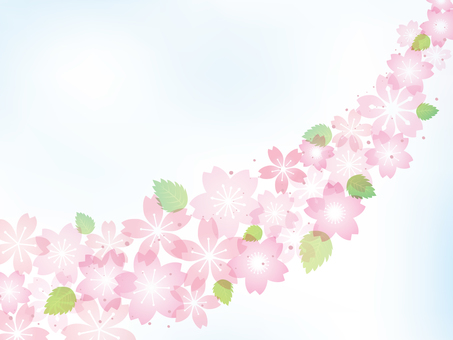 Cherry blossom image 016