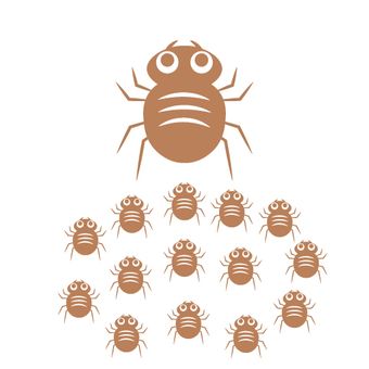 Image of mite breeding