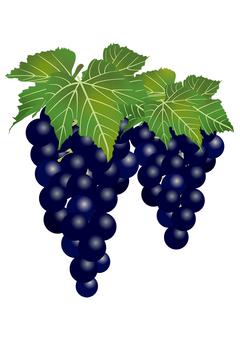 Delicious grape 15