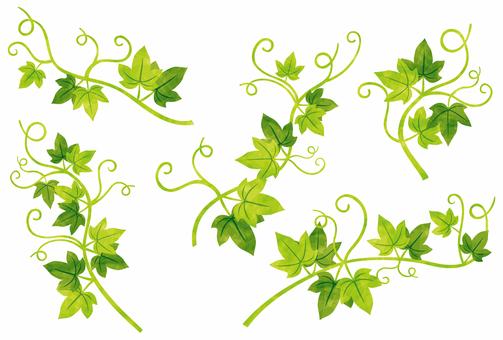 Ivy leaf / part set