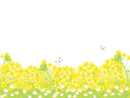 유채 꽃밭 3