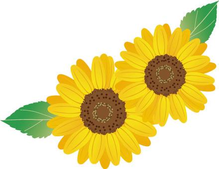 Sunflower Polaroid Photos