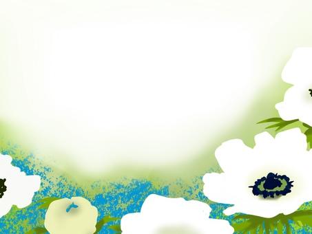 銀蓮花屬卡片花田