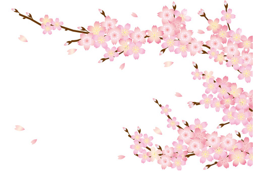 Cherry blossom petals and branches