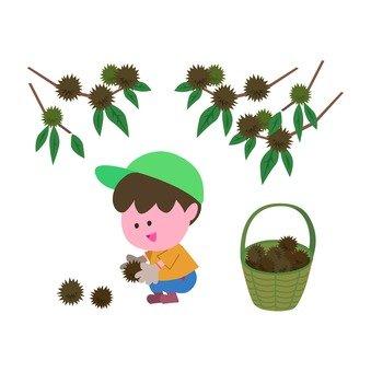 Child picking chestnut
