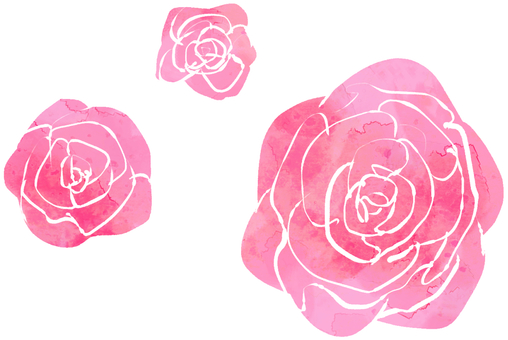 【장미】 【핑크】