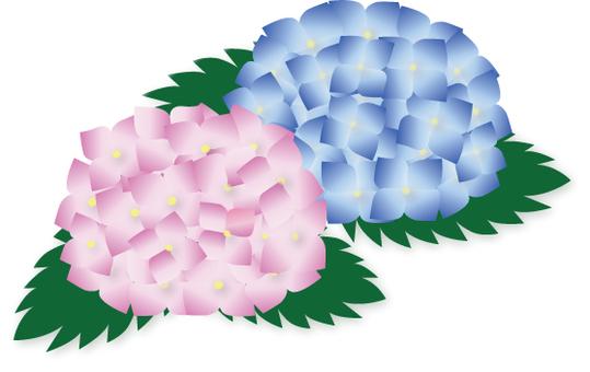 수국 2 륜 핑크 블루