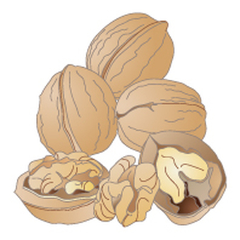 Walnut display Recommended raw material 20 items