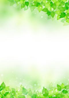 Fresh green 297