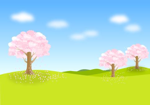 Cherry blossom view 02