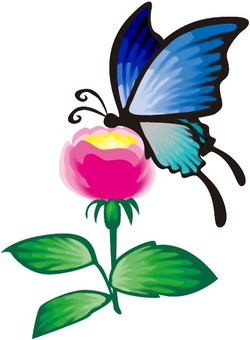 나비와 장미