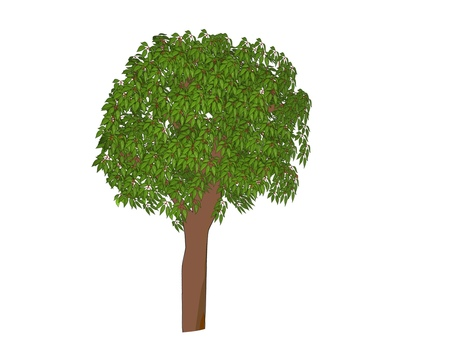 Camphor tree_framed