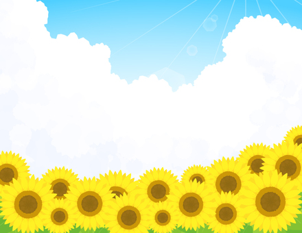 Sunflower background _ sunflower sunlight sky