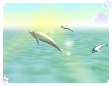 Dolphins and morning light