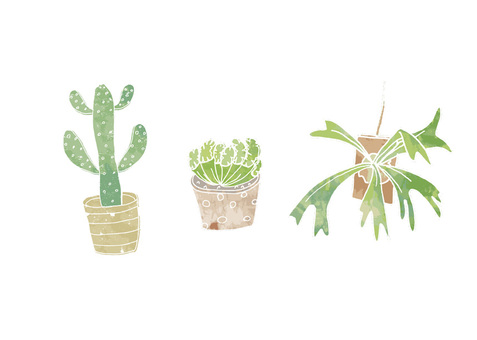 Cacti Succulent Illustration 3