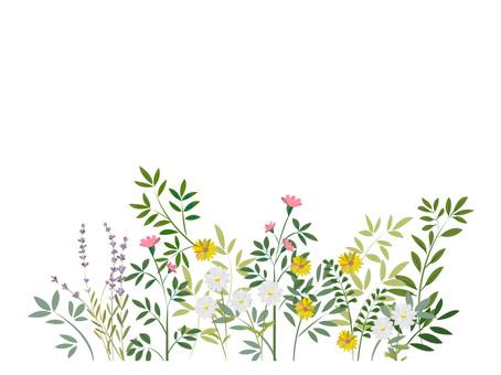 ハーブと野草のフレーム