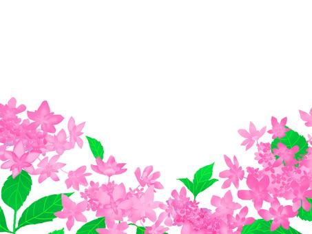 粉紅色的繡球花