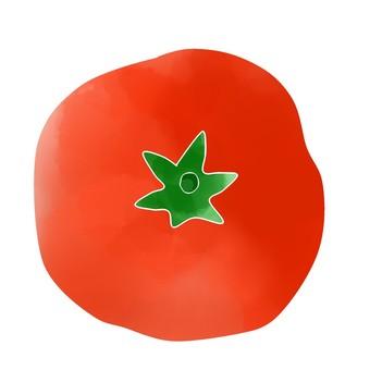 야채 토마토
