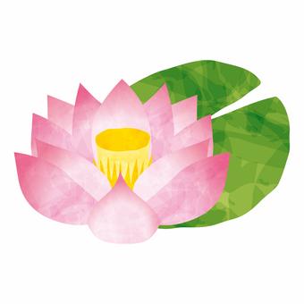 Lotus flower color