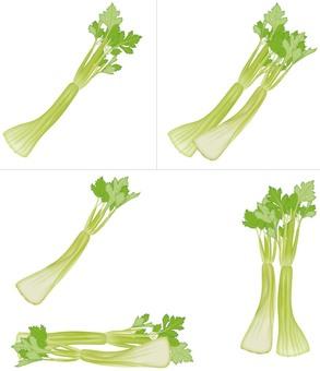 Celery / Vegetable