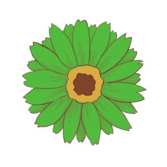 Gerbera green