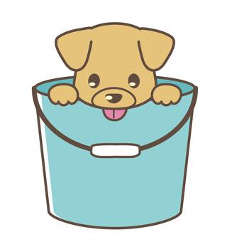 Wanko in bucket