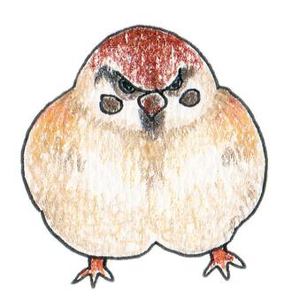 Plump Sparrow