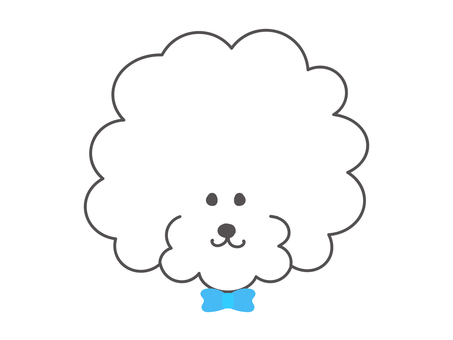Toy poodle boy