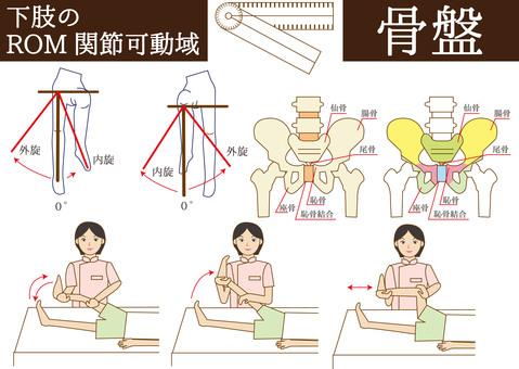 ROM (range of joint motion), pelvis