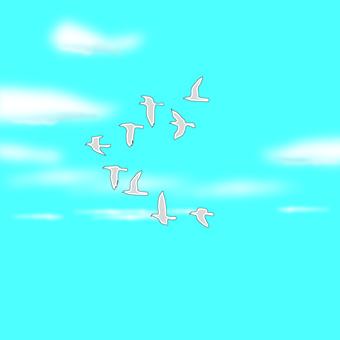 Sky bird dove fly peace