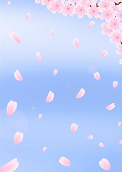 Cherry blossom background / Wallpaper