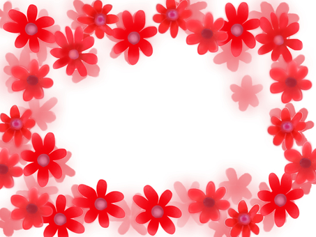 Cineraria red