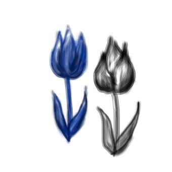 Flower / Tulip