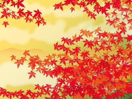 在日落的秋葉