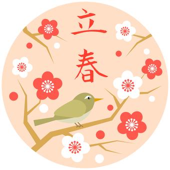 Shintun image