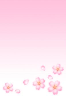 Sakura postcard <vertical>