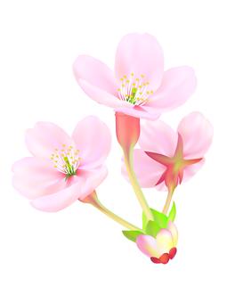 0003_ 벚꽃