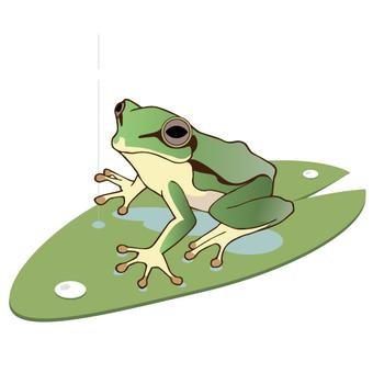 장마 개구리