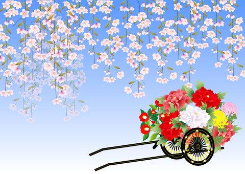 수양 벚나무와 御所車