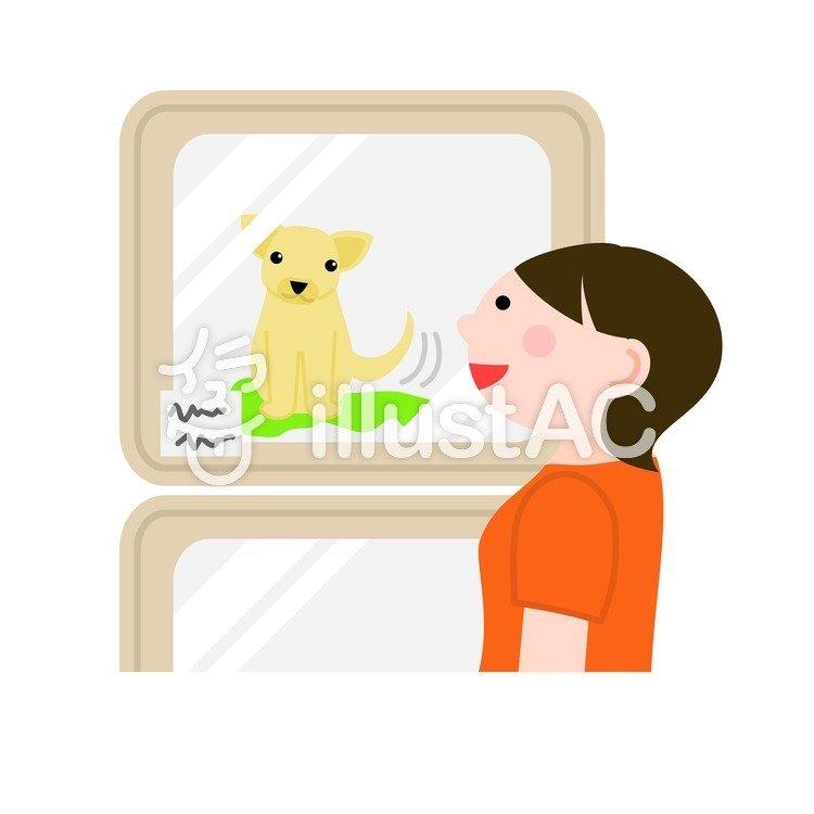 ペットショップで犬を眺める女性イラスト No 241881無料イラスト