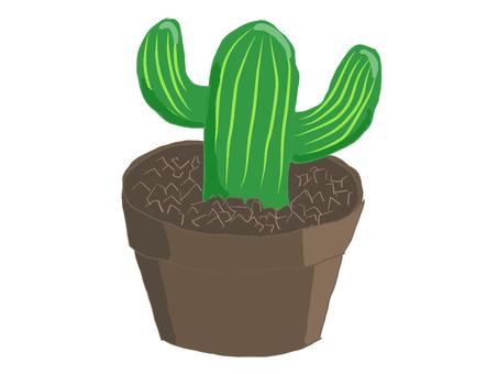 Cactus in the flowerpot