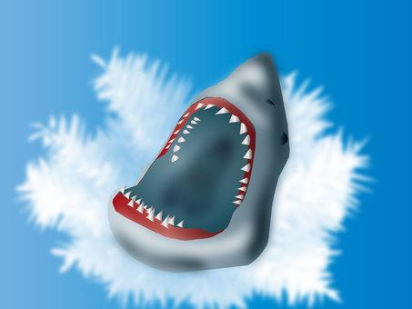 Shark 03