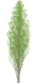Trees _0003_04
