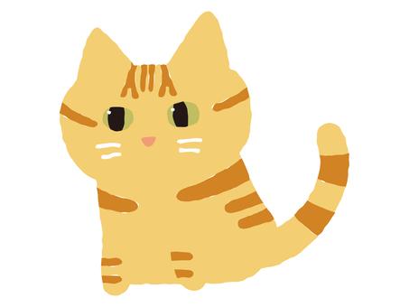 Brown tiger cat